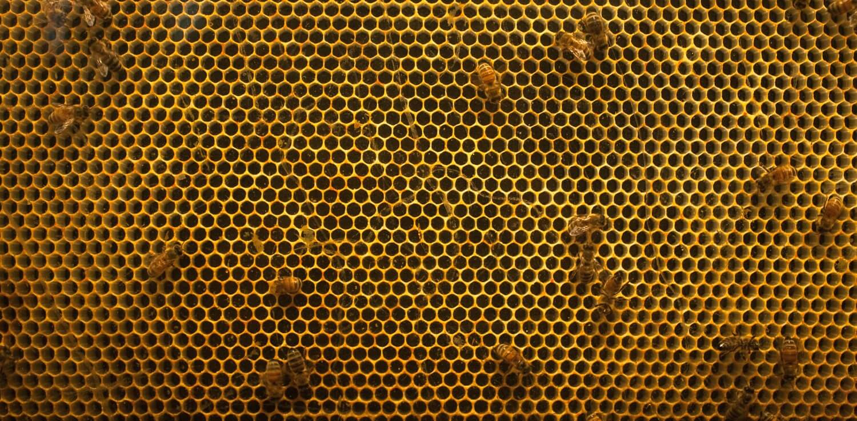 beehive-by-kulesh